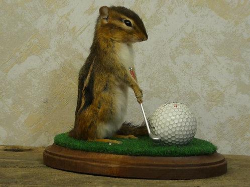 Golfing Chipmunk Taxidermy