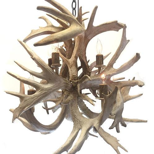 Eight Light Fireball Whitetail Deer Antler Chandelier