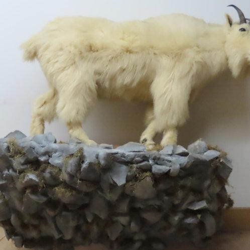Lifesize Mountain Goat w/ Rock Base Wall Mount