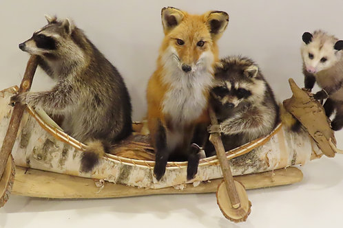 "4 animals in a canoe "" Noah's Ark"""
