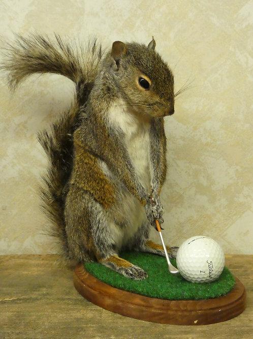 Golfing Squirrel Taxidermy