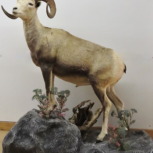 Lifesize Stone Sheep w/ Base