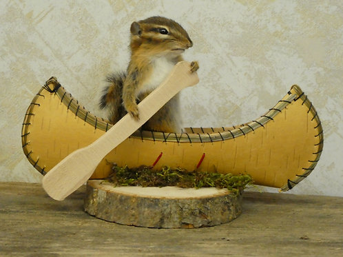 Canoeing Chipmunk Taxidermy
