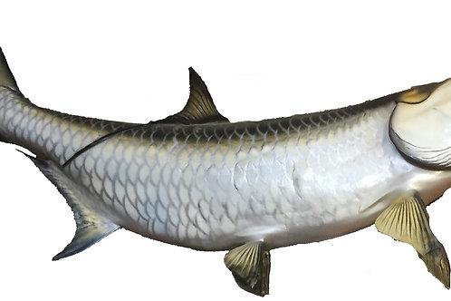 Tarpon Lg Taxidermy Reproduction Fish Mount
