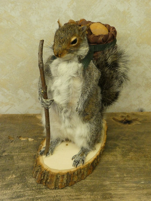 Hiking Squirrel Taxidermy