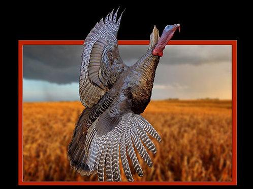 Turkey Flying Taxidermy Mount