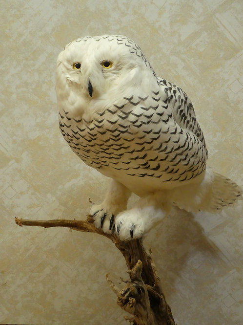 Standing Faux Snow Owl Taxidermy