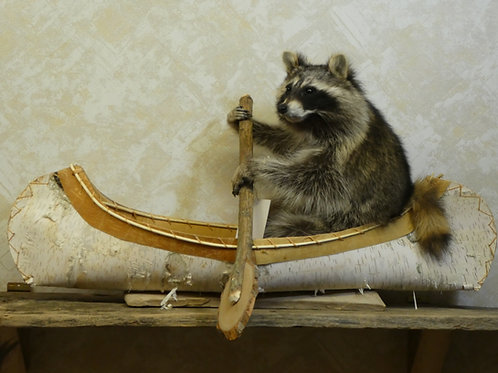 Single Canoeing Raccoon Taxidermy