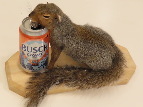Squirrel w/ Beer can