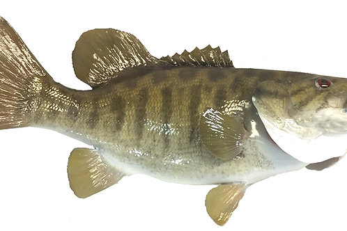 Smallmouth Bass Taxidermy Reproduction Fish Mount