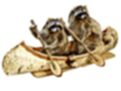 canoeing-raccoon-pair.jpg