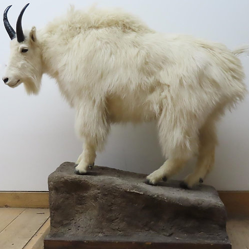 Lifesize Mountain Goat