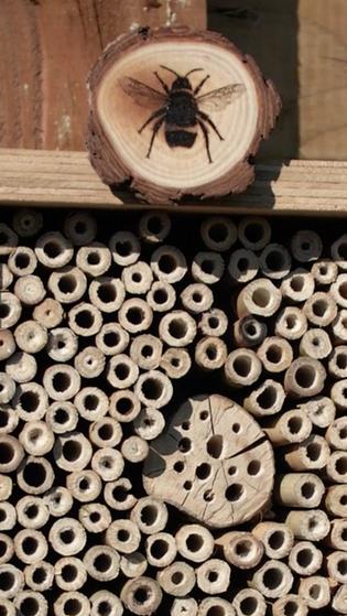 Bee kind - build a bee OR bug hotel.