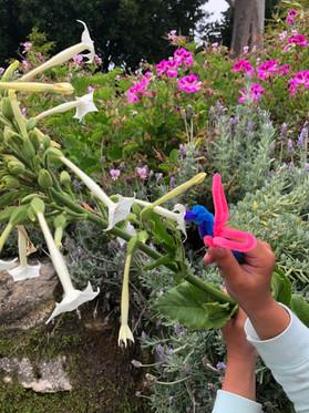 Pipecleaner pollinators