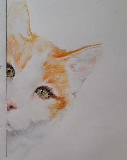 Coucou le chat, travail aux crayons