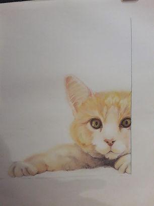 coucou le chaton, dessin
