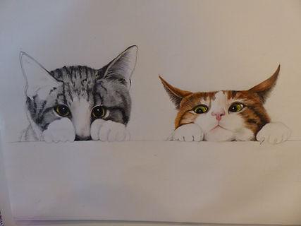 jeune chat et chaton