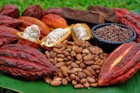 INTERNATIONAL Cacao & CHOCOLATE AWARDS 'Grand cru' PLANETGOUT