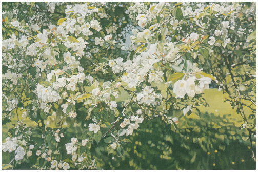 Apple Blossoms III
