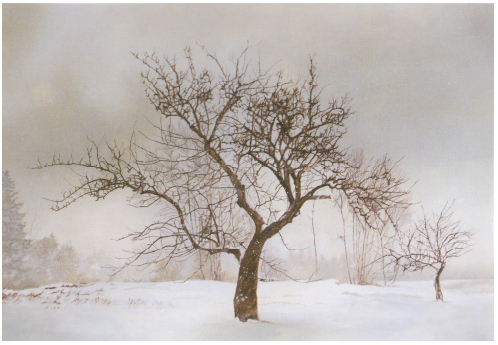 The Orchard in Winter III