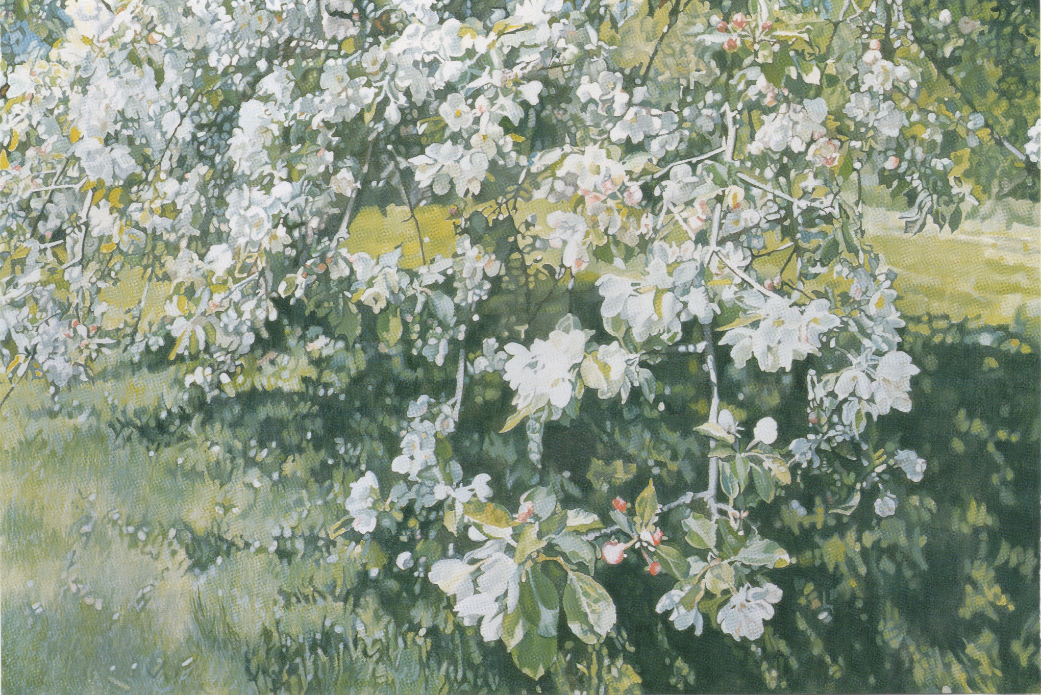 Apple Blossoms IV