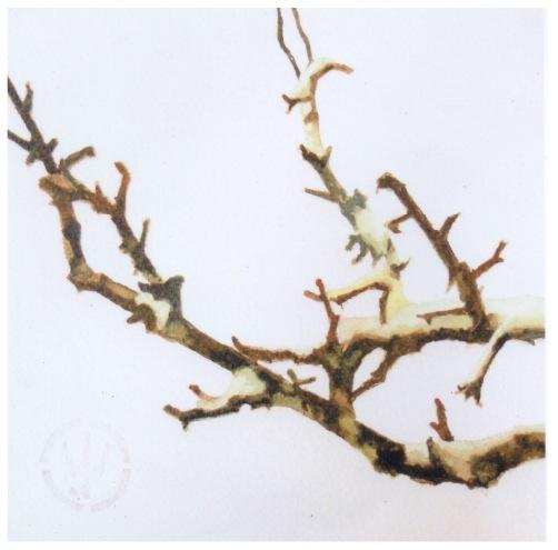 """""""Winter Branch"""""""