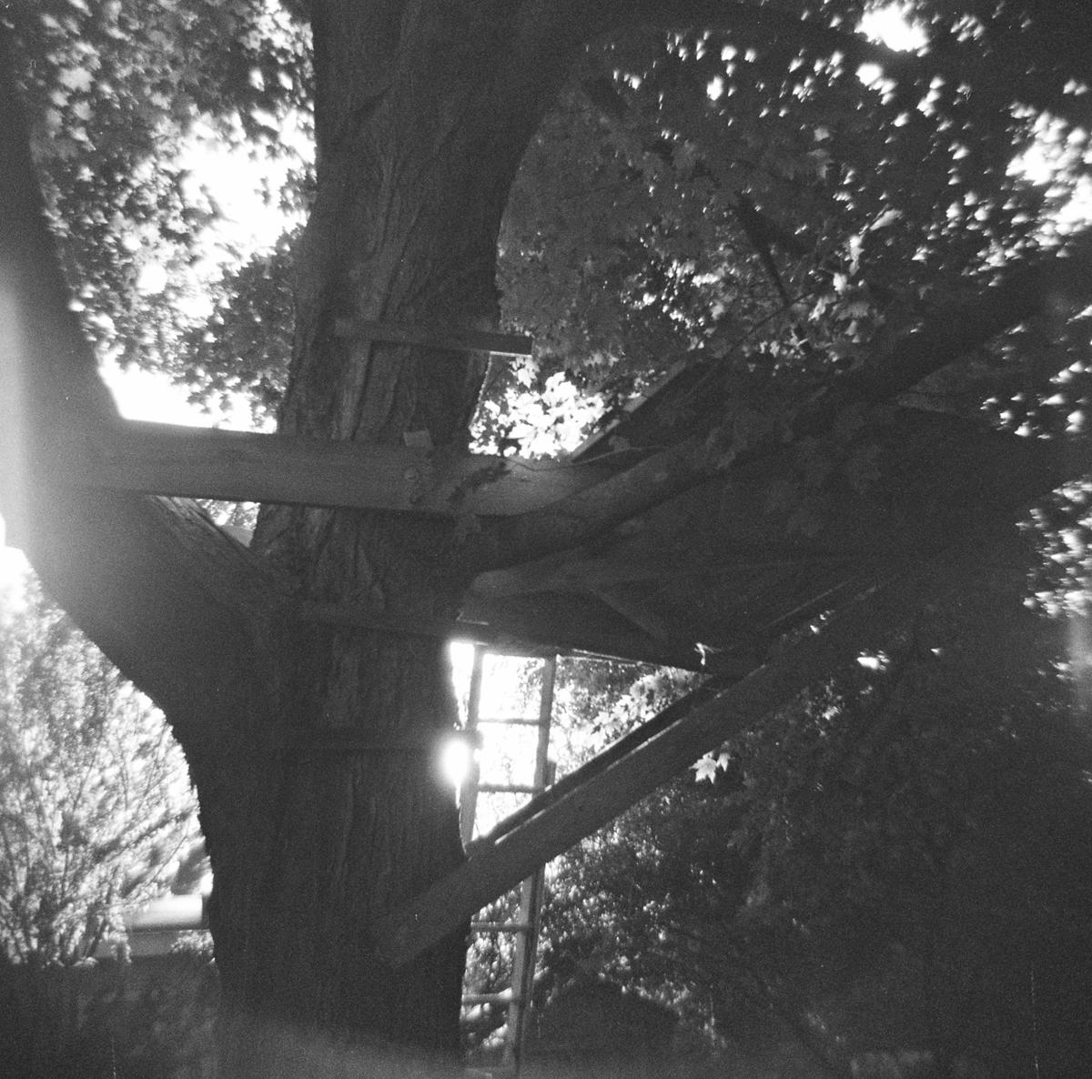 Backyard Perch