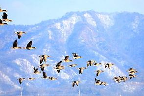 migratory-birds-4700298_640.jpg