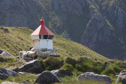 Sheep around lighthouse