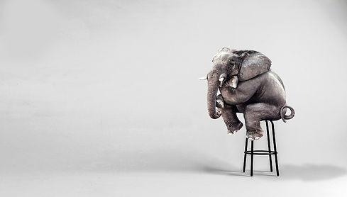lonely elephant sitting in minimalist ro