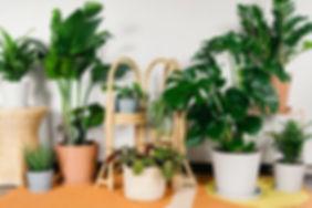 20190530_Beginner_Plants_0007.jpg
