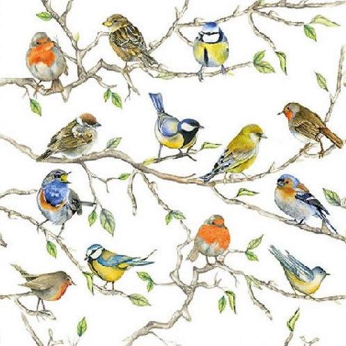 Servetten Birds Meeting