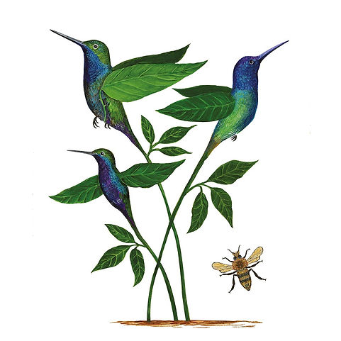 PPD servet Ankara kolibrie.jpg