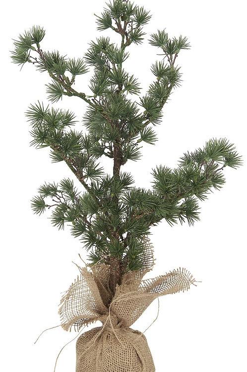 Kerstboom ceder - l