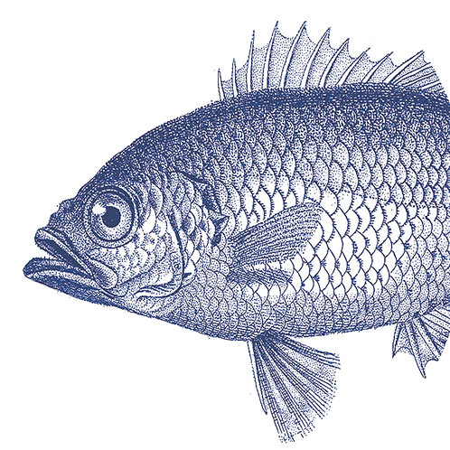 Servetten 'Fish Marine'
