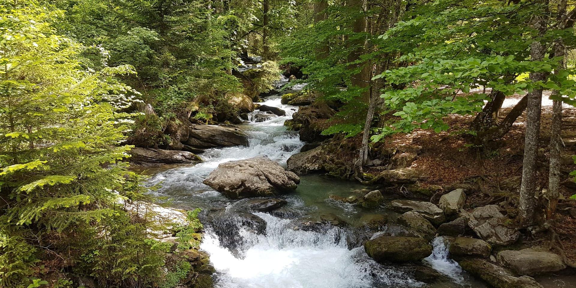 river through trees landscape.jpg