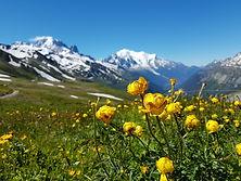 Globeflowers Col du Forclaz
