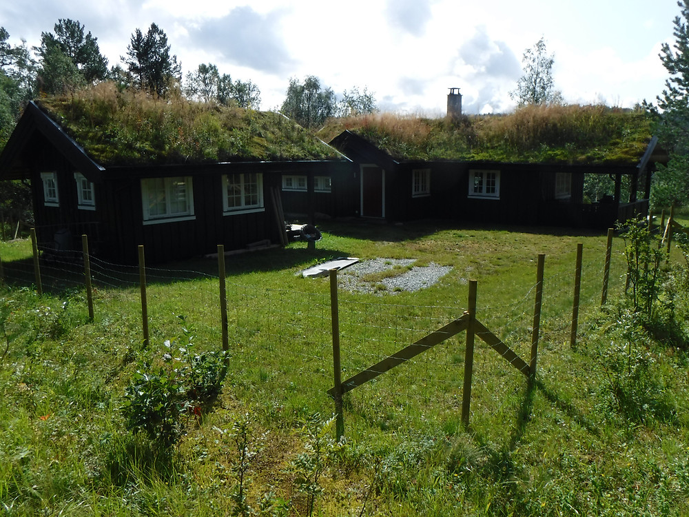 small cabins with vegetation on roof