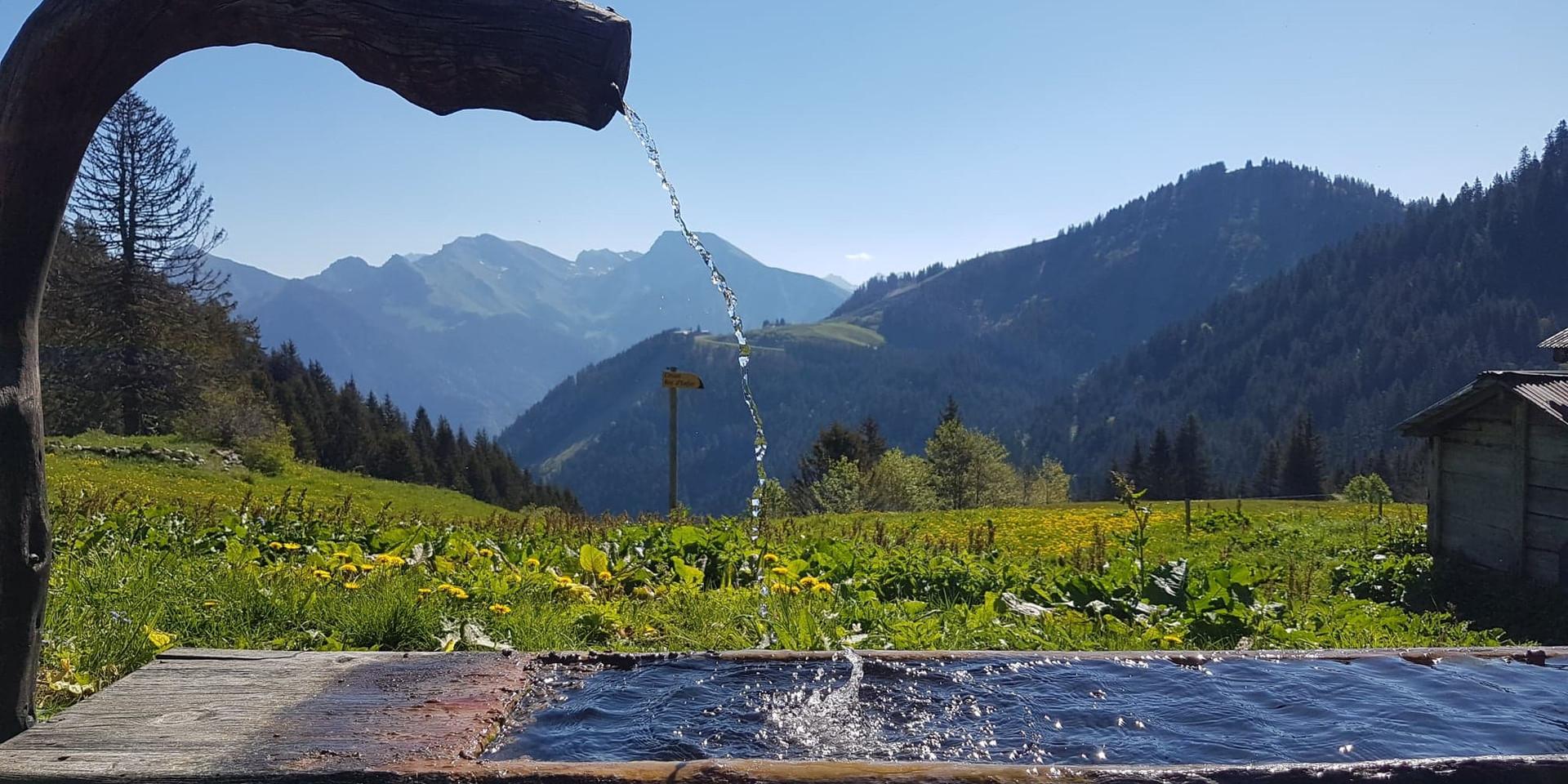 water trough.jpg