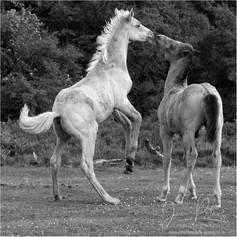 Quantock Ponies_2.jpg