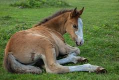 Pony 2.jpg
