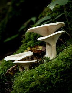 Fungi_Horner Woods_01.jpg