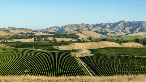 NZ Vineyards