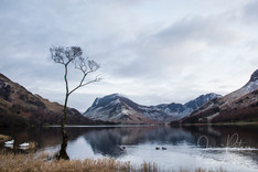 Lone Tree_Buttermere