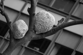 London_Tree Rocks