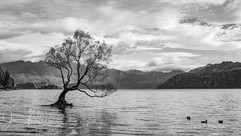 That Tree_Lake Wanaka