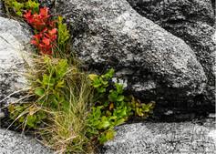 Rock Plant_2.jpg