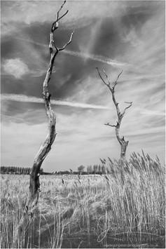 Waste-Land Trees.jpg