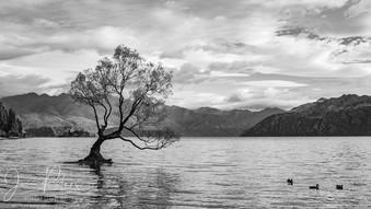 That Tree - Lake Wanaka