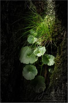 Rock Plant_1.jpg